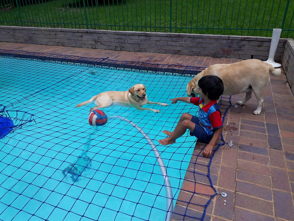 dog and child on swimming pool net